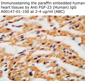 anti human FGF23 IgG A00147-01-100 from aviscera bioscience