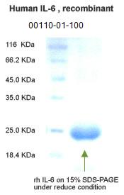 human IL-6 recombinant 00110-01-100 is available in stock