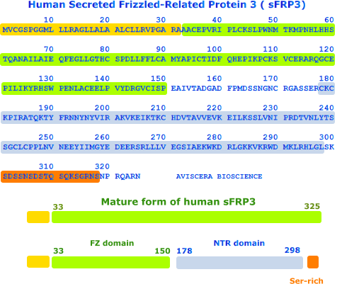 human secreted FRP3